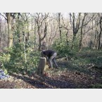 Tree thinning at Lees Hall Wood