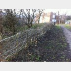 Hedgelaying in the Gleadless Valley